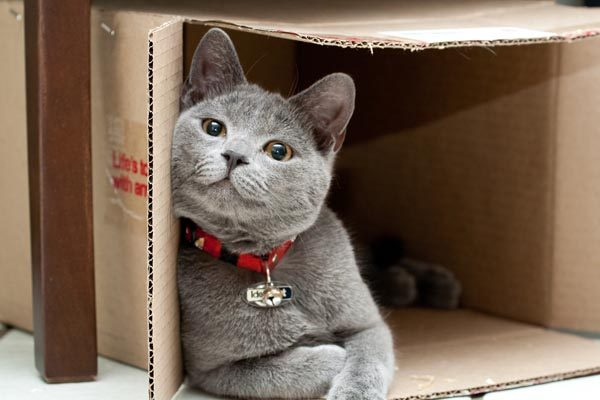 Cats need places to climb and enclosed places such as boxes to hang out in. Photo by Shutterstock