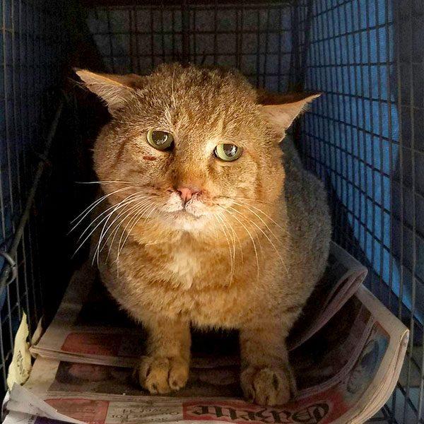 Paul-the-Cat-Guy-05e