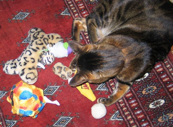 An assortment of toys to choose from. Photo by Marilyn Krieger, CCBC