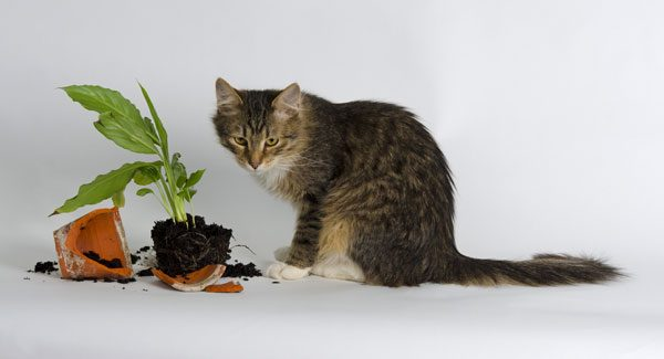 A fluffy brown cat standing next to a broken plant vase.