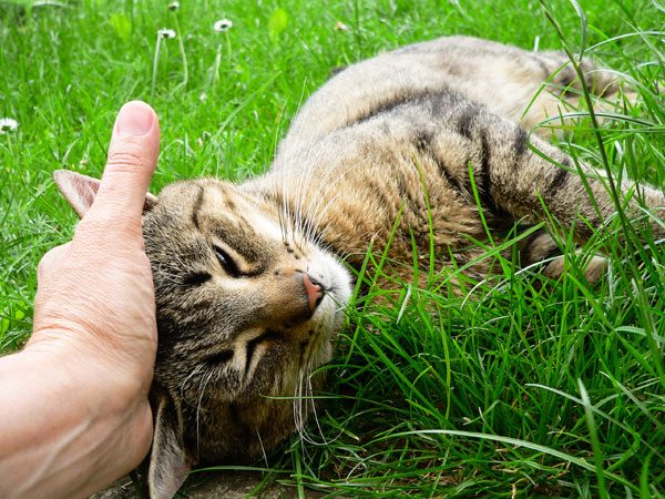 How To Convert An Outdoor Cat Into A Happy Indoor Cat   Catster