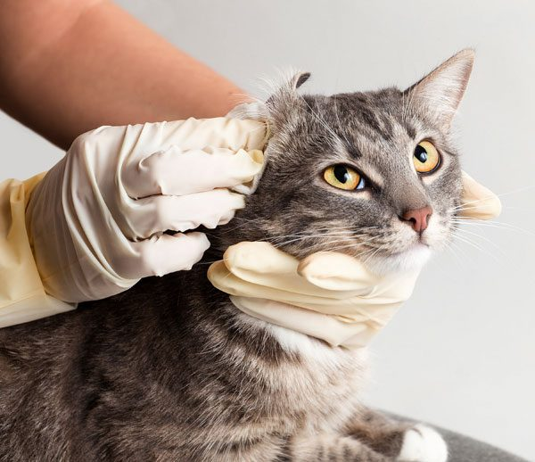 Before relocating cats indoors, they need thorough veterinarian examinations. Photo by Shutterstock