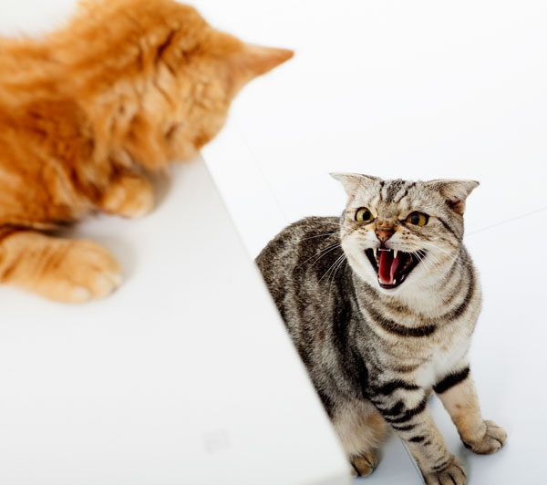 Two cats fighting.