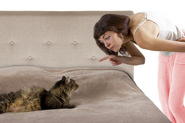 Although a cat behavior might not be appreciated, it's not inappropriate.