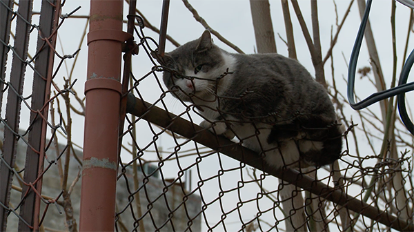 "Street cat ""Bubba"" sits on a fence. Photo courtesy of The Cat Rescuers"