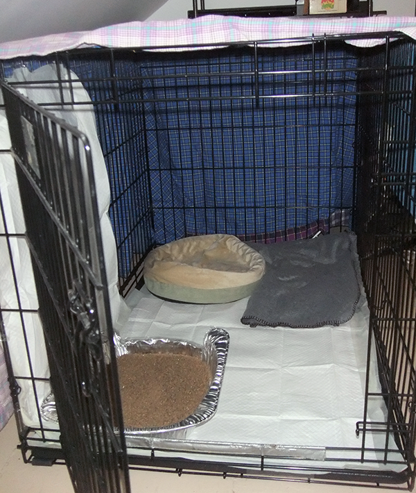 """I even borrowed a dog crate from one of my co-workers and set it all up so Kissy could be safe and stay on """"cage rest"""" until she learned how to get around on three legs."""
