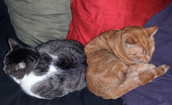 """Thomas and Kissy even reached the point of enjoying some """"deniable snuggling."""""""