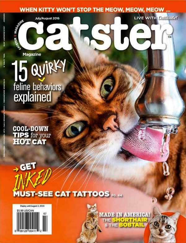 Catster-Cover-July-Aug-2016