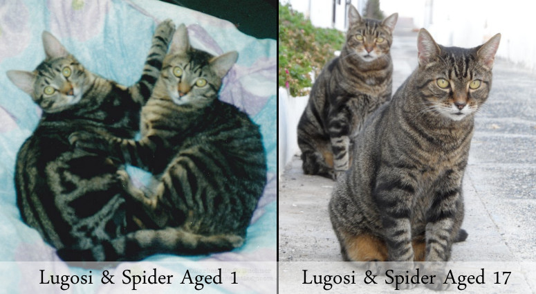 Lugosi-Spider-Age1-and-Age17