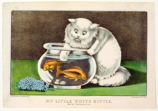 Meow-Mix-My-Little-White-Kittie-After-the-Goldfish