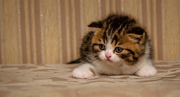 Adorable kitten. Photo by Shutterstock