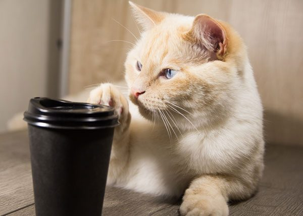 Cat knocking a cup off the table. Photo by Shutterstock