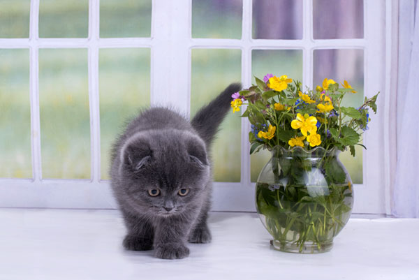 A gray kitten next to a vase of yellow flowers.