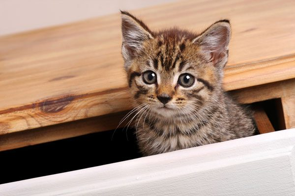 Keep kittens safe. Check drawers, dryers and other areas before closing them