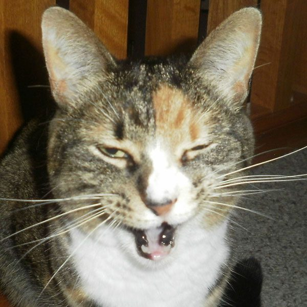 5 Reasons I Love My Cats' Mouths
