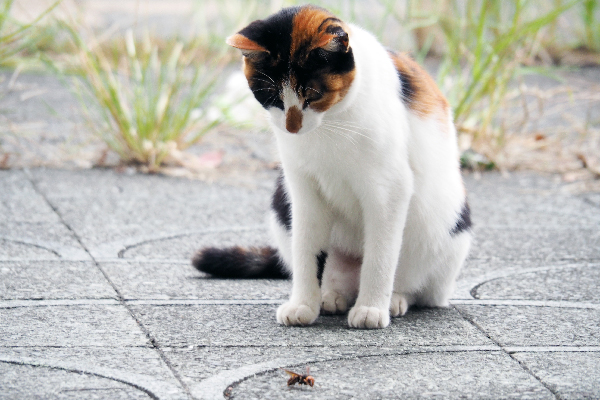 A cat staring at wasp on the ground.