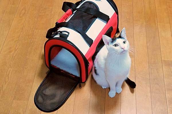 A black and white cat sitting next to a carrier.