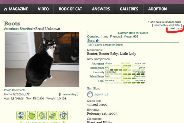 Search-Page-Stroll-Catster