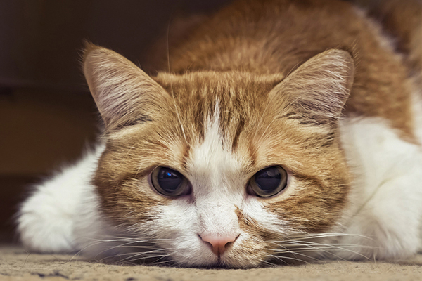 Do You Have a Dehydrated Cat? - Catster