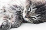 A happy gray cat sleeping.