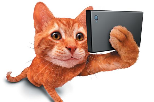 An orange tabby cat taking a selfie.