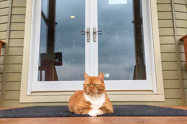 An orange cat stands guard outside of a winery.