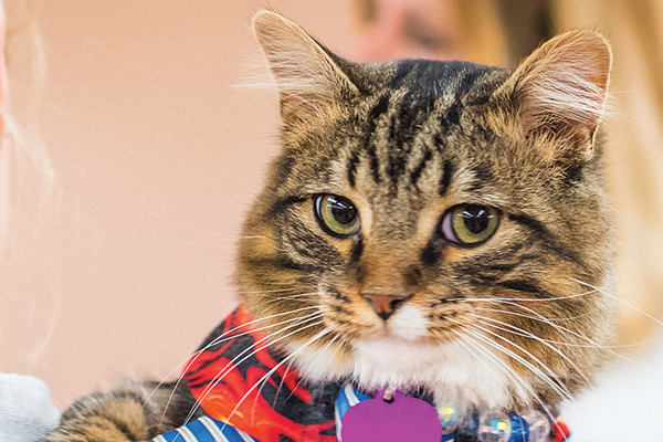A cat visitor to Cat Camp/Courtesy Cat Camp.