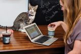 Crumbs & Whiskers cat cafe.