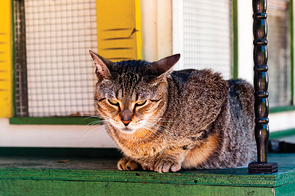 Get yourself to Key West to check out the cats at the Ernest Hemingway Home and Museum. Photography by Robert hoetink/shutterstock.