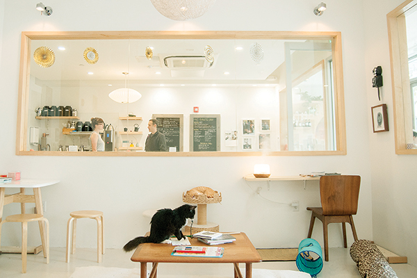 Kittea cat cafe in California.