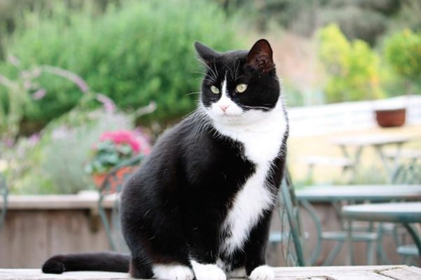 A black and white cat at a winery.