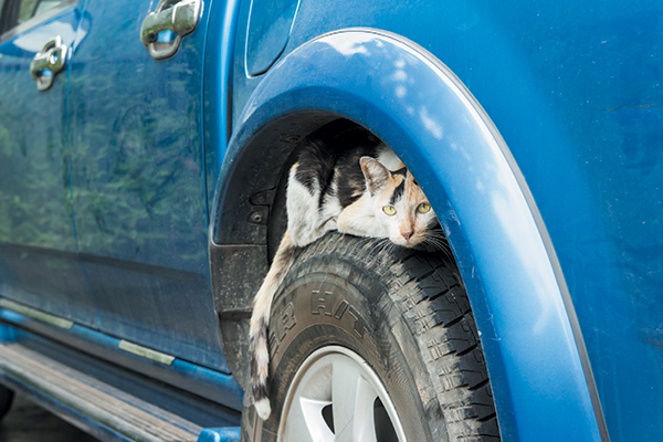 An outdoor calico cat asleep on a car tire.