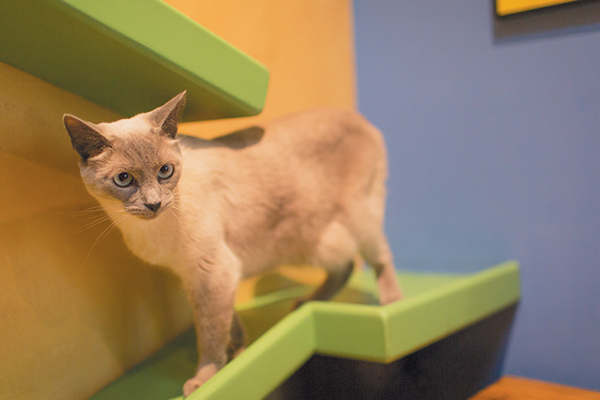A cat in a cat maze.
