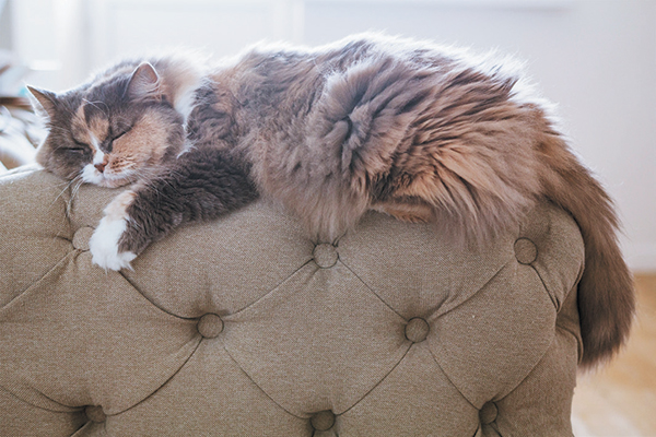 A fluffy multicolored cat asleep on a couch.