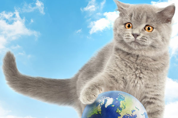 A gray cat with a world globe.
