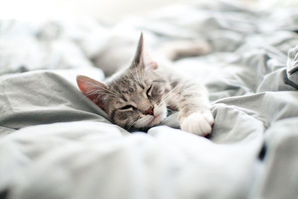 Why Do Cats Suck On Blankets 5 Reasons Catster