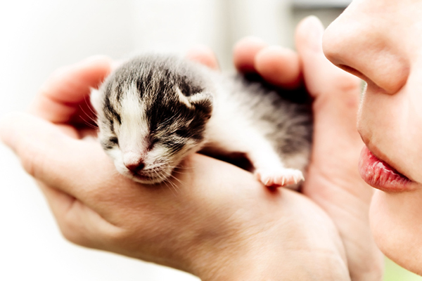 A newborn kitten in the palm of a human hand.