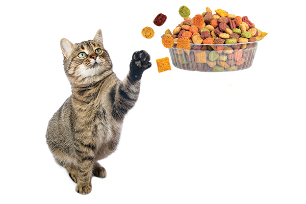 A brown tabby cat goes after a bowl of dry food.