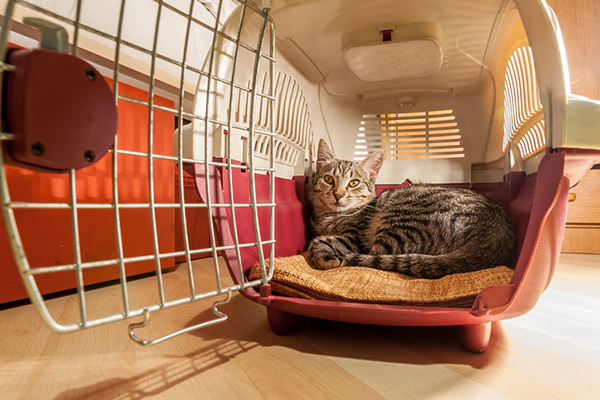 Traveling With Cats In The Car 5 Ways To Calm Your Kitty