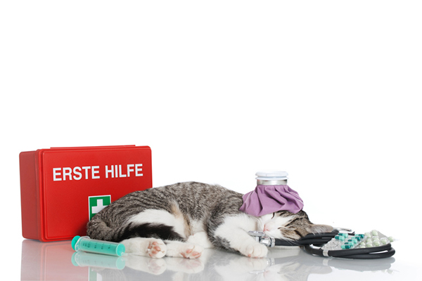 A cat with an emergency first aid kit.