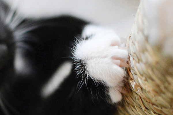 A black cat scratches a scratching post. Photography by mrtom-uk/istock.