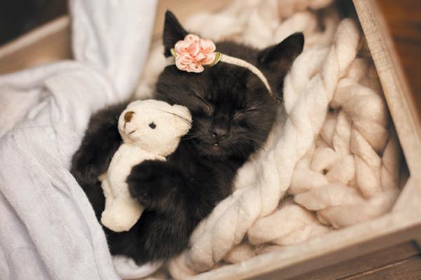 An example of Kitty Schaub's newborn kitten photos.