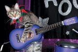 The Amazing Acro-Cats.