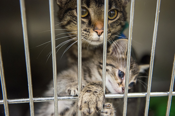 Kittens in a shelter cage. Photography by Brigette Supernova.