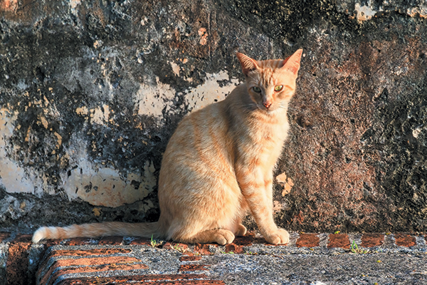 A stray orange cat living outdoors.