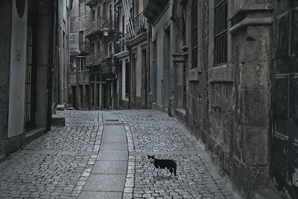 A black cat on a spooky dark path.