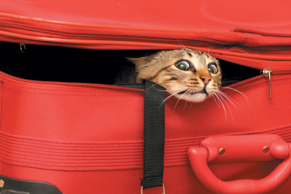 A brown cat stuck inside a suitcase.
