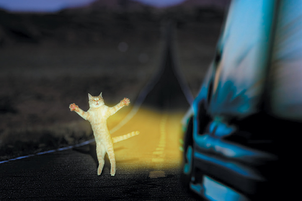 A cat on the road.