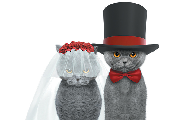 A cat bride and groom.
