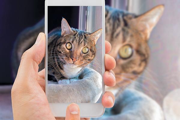 Posting cats on social media.